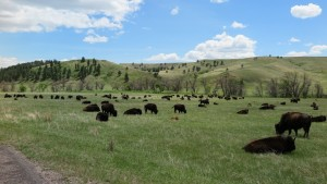 Eagle Adventure Tours - USA Reise Rocky Mountains Yellowstone National Park (7)