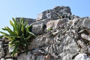 Eagle Adventure Tours - Mexico_Urlaub (18)